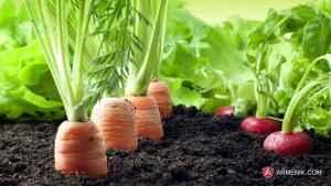 Armenia Agriculture