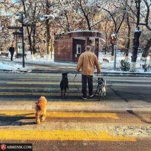 man with dogs sayat nove st